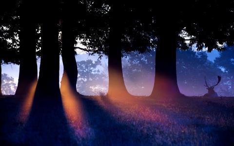 性质,自然,光线,鹿,树