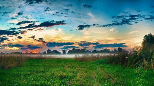 性质,草,雾,早上
