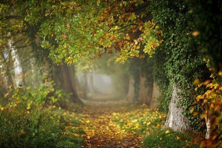 秋天,魔术,胡同,雾,叶子,草,波兰,dranikowski,jesien胡同