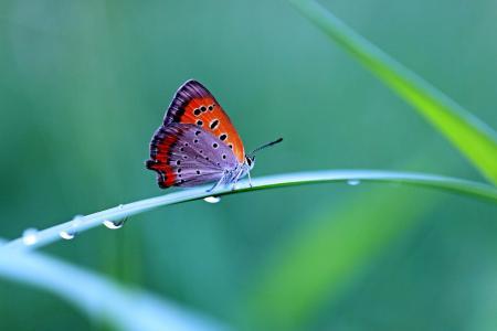 对比,滴,草,蝴蝶