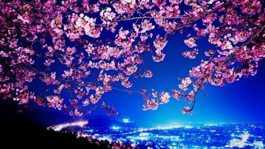 城市,城市,建筑物,夜,灯,樱花