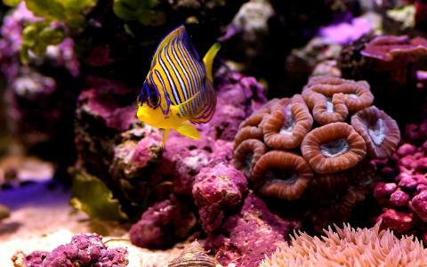 水下世界,鱼