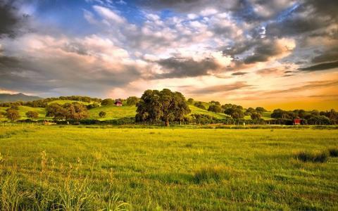云,草地,树木,绿党