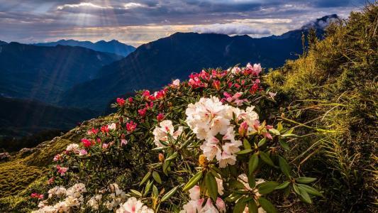 自然,景观,天空,云,光线,花,山,自然,晚上,斜坡,杜鹃花