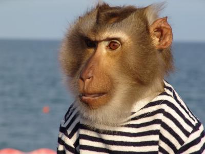 背心,猴子,胡子,水手