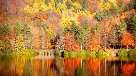 秋天,性质,河,森林