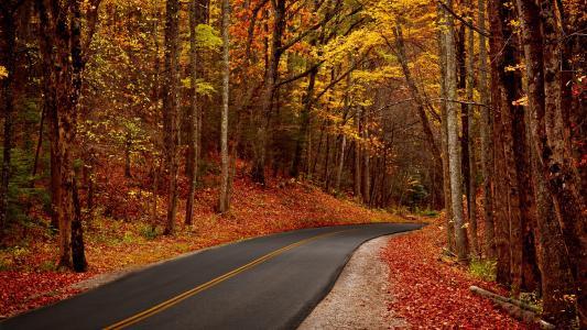 性质,叶子,树,公园,森林,步行,秋季,人类发展报告,叶子,树木,森林