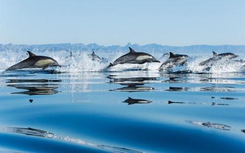 滴,海豚,羊群,速度,跳跃,海,喷雾