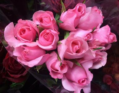 玫瑰,粉红色,花束,背景