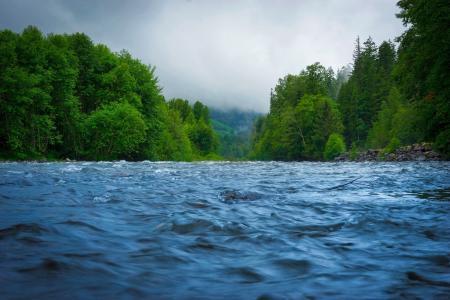 天空,树木,河流,科罗拉多