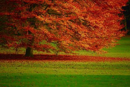 树,秋天,叶子