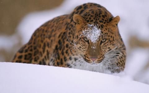 猫,雪,捕食者