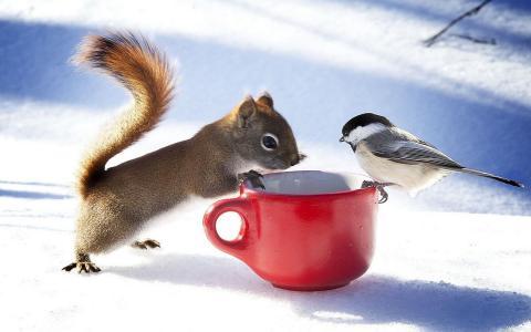 松鼠,山雀,冬天,杯子,情况,积极