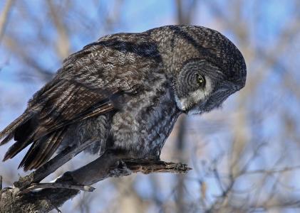 鸟,猫头鹰,世界鸟,美丽