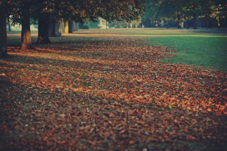 树木,地毯,性质,叶子,秋天