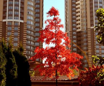 秋天,城市,建筑物,高层建筑,孤独的树