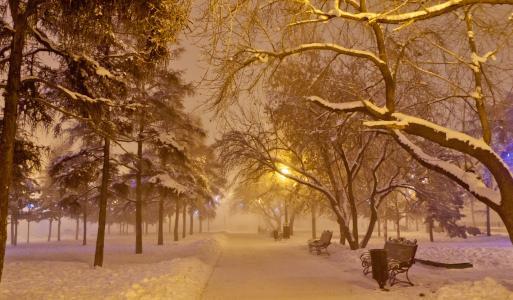 冬天,雪,公园,晚上