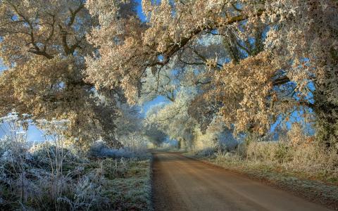 白霜,景观,树木,路