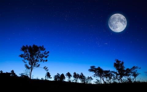 天空,性质,晚上,星星,月亮,树木
