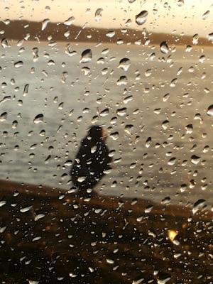 女孩,水,滴,雨,晚上,警察,人,kokshetau,日落,悲伤