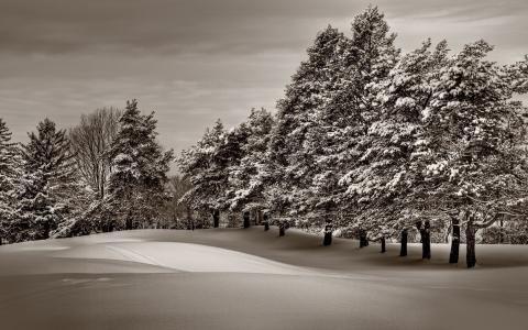 冬季景观,冬天,雪