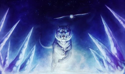 先驱,猫头鹰,艺术,由sanguisgelidus,白色,老虎