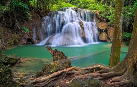 茂密,森林,瀑布,溪流,树木,绿叶,美景