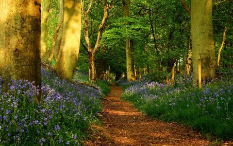路径,树,叶子,森林