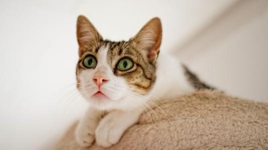 好奇的小猫咪