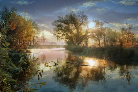 性质,池塘,树,秋,霜,雾,霜