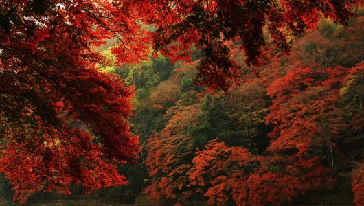 秋天,叶子,分支,性质
