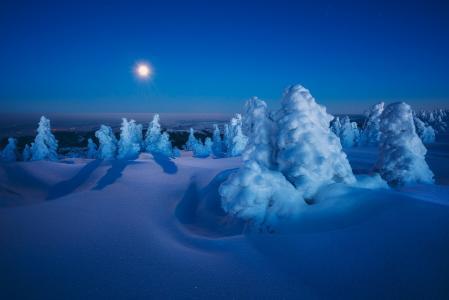 雪,冷杉,随风飘雪,冬天,月亮,夜,Szabo Zsolt Andras