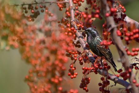 世界鸟类,宏观照片主题,性质