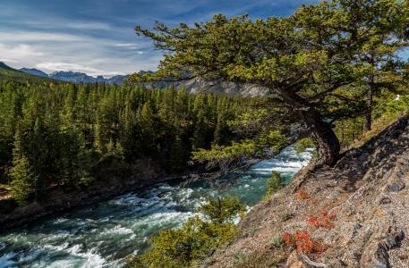 加拿大,河,班夫,树木,性质