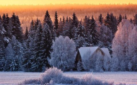 性质,冬天,房子,森林