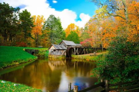 自然,秋天,美丽