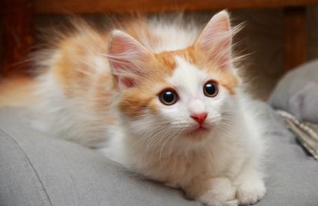 小猫,蓬松,发现