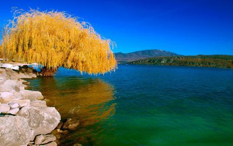 湖,景观,自然,柳,秋,树