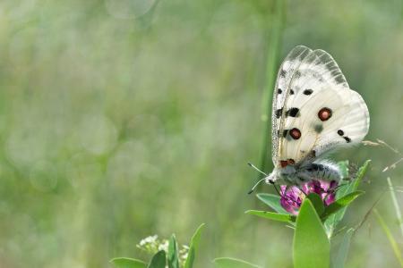 草,夏天,性质,蝴蝶,散景,宏,鲜花
