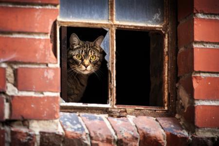 猫,窗口,照片,创意