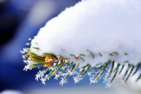 宏,雪,冬天,针,分支,云杉