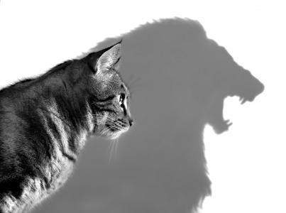 猫,梦,狮子,阴影