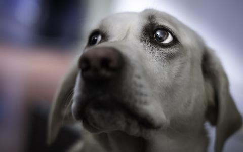 看,狗,朋友
