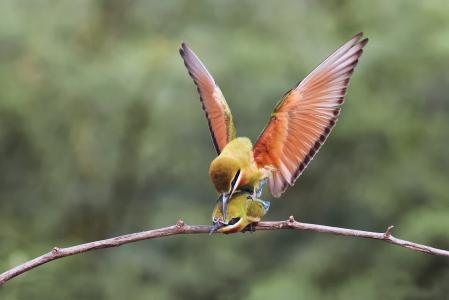 鸟,春天,背景,极简主义。