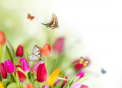 鲜花,模糊,蝴蝶,郁金香,春天
