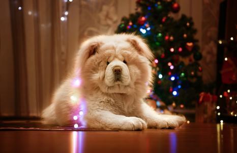 假期,新年,动物,狗,狗,花环,圣诞树,周到