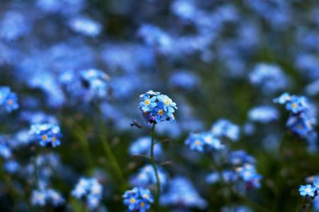 蓝色,鲜花,散景,黄色,重点,颜色,模糊
