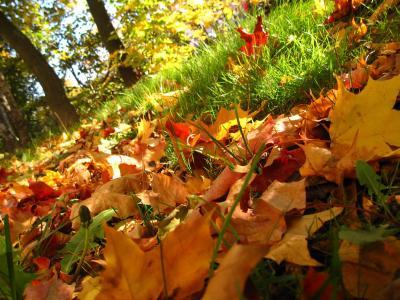 草,性质,叶子,秋天,树木