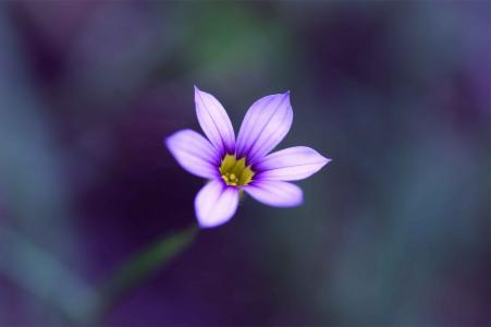 丁香,模糊,宏,花卉