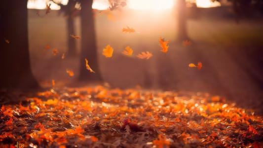 太阳,秋天,落叶